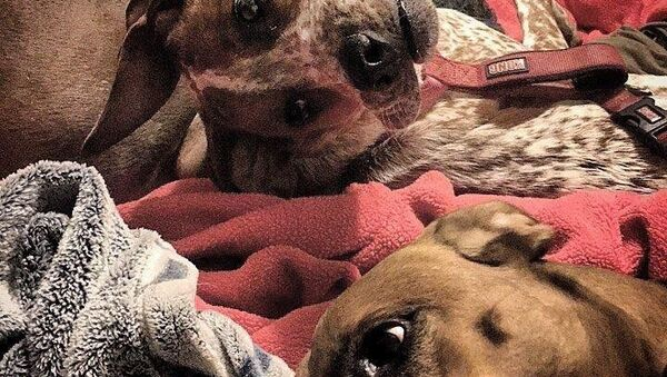 I cani di Reddit - Sputnik Italia