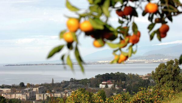 Veduta del litorale di Sukhum - Sputnik Italia