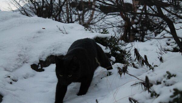 Il gatto di Vladislav Evglevskij - Sputnik Italia