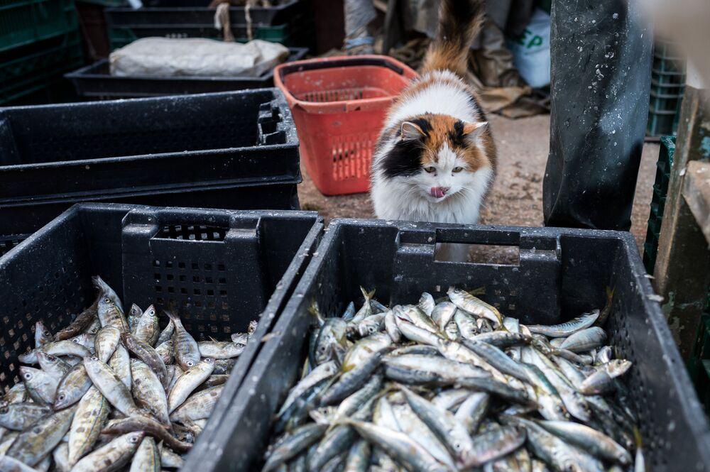 Cesti di pesci visti durante la pesca nel Mar Nero a Sebastopoli.