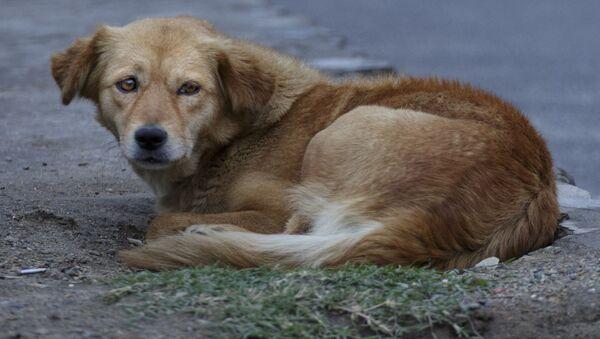 Бродячая собака - Sputnik Italia