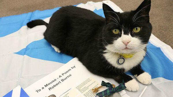 Palmerston the Cat - Sputnik Italia
