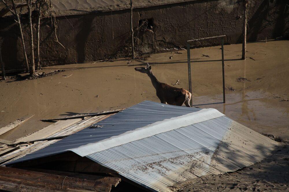 Un animale nello zoo inondato a Tbilisi.