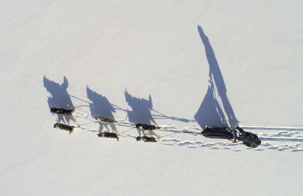 Una corsa con i cani Karadag nei pressi di Krasnoyarsk, Siberia, Russia. - Sputnik Italia