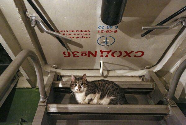 La vita a bordo dell' incrociatore Ammiraglio Kusnetsov - Sputnik Italia