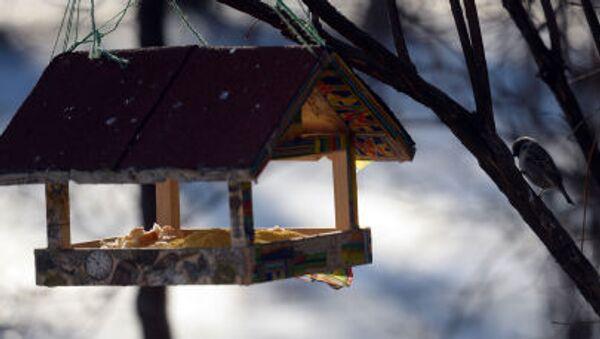 Птица у кормушки в парке Сокольники в Москве - Sputnik Italia