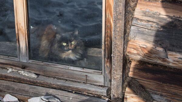 Una gatta - Sputnik Italia
