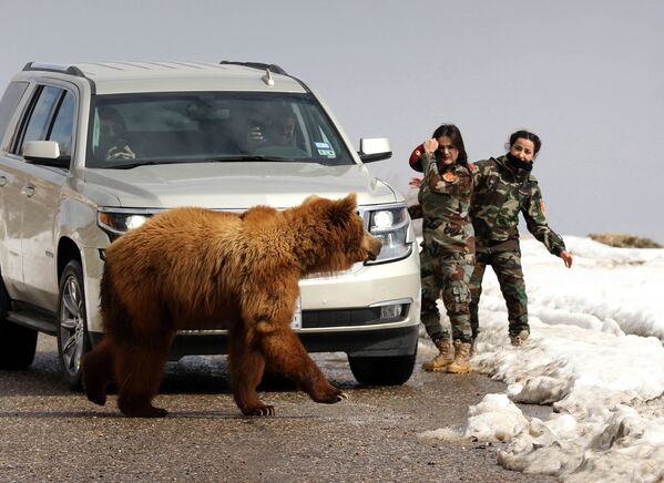 Donne militari curde peshmerga e giornalisti lasciano andare un orso salvato dagli attivisti. - Sputnik Italia
