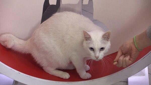 Il gatto dell'Ermitage - Sputnik Italia