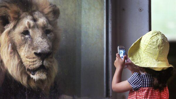 Una bambina fotografa un leone - Sputnik Italia