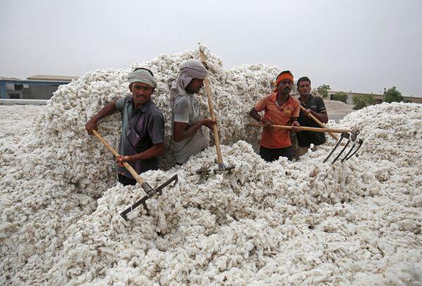 I lavoratori scaricano il cottone dal camion nella città indiana di Kadi. - Sputnik Italia
