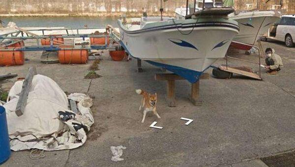 Il cane in questione ♥ - Sputnik Italia