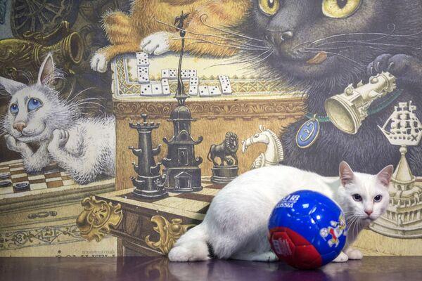 Achille, il gatto oracolo dei Mondiali di Calcio 2018 - Sputnik Italia
