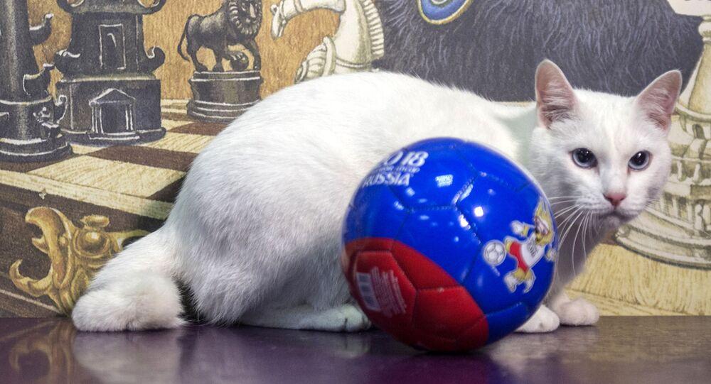 Achille, il gatto oracolo dei Mondiali di Calcio 2018