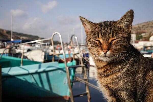 Un gatto a Balaklava - Sputnik Italia
