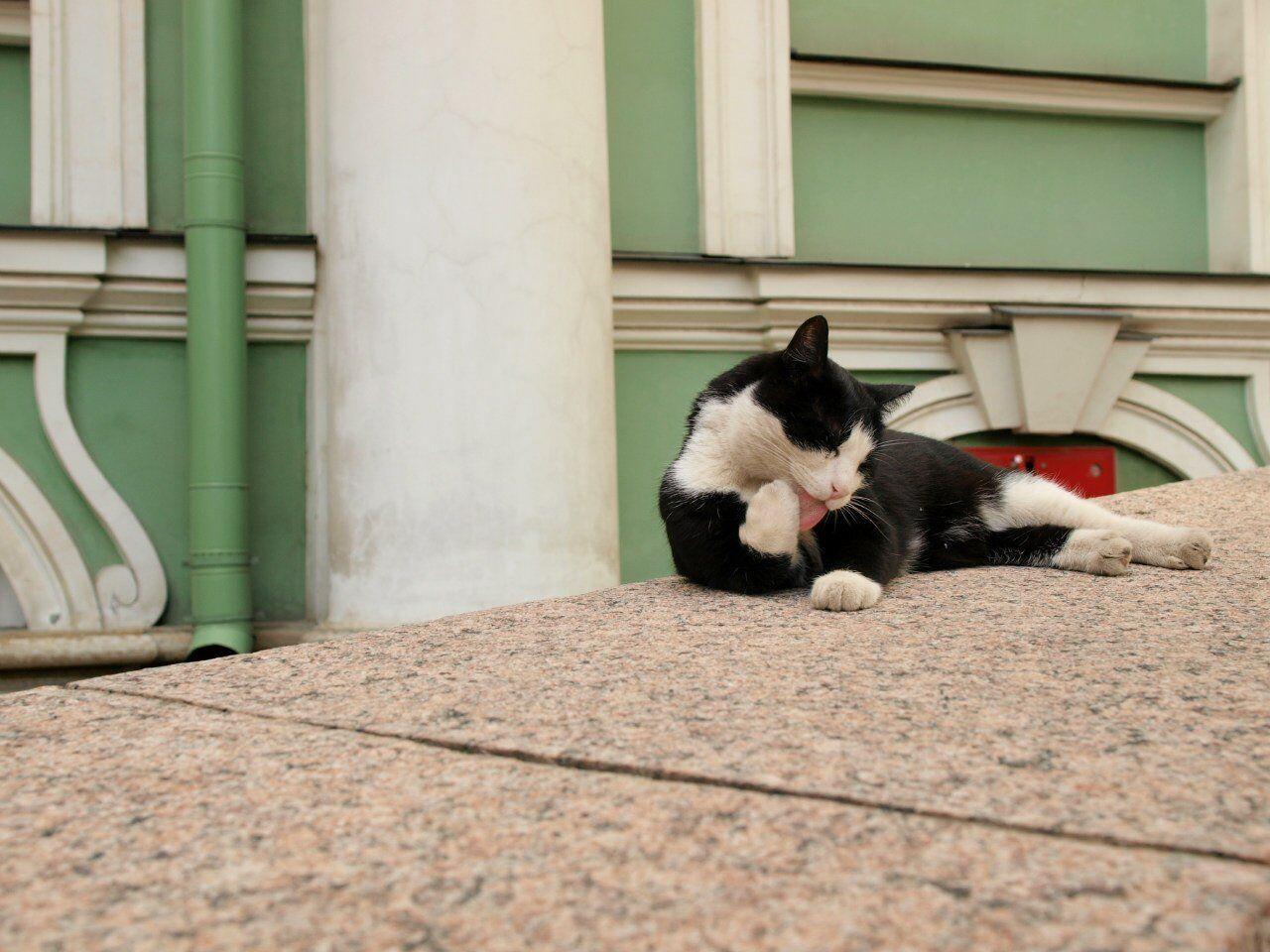 Un gatto d'Ermitage, Russia