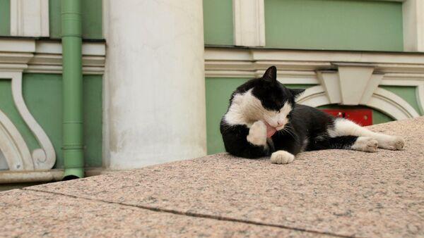 A cat is lying in the Hermitage yard - Sputnik Italia