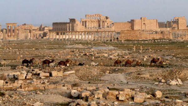 Palmira, Siria - Sputnik Italia