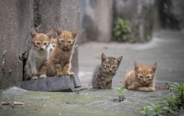 Cinque gattini in una via nel quartiere residenziale a Shanghai, Cina. - Sputnik Italia