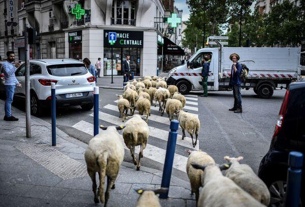 Un fattore nei pressi di Parigi. - Sputnik Italia