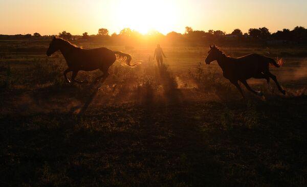 Cavalli nella regione di Rostov. - Sputnik Italia