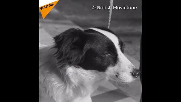 Questo cane ha salvato la Coppa del Mondo del 1966 - Sputnik Italia