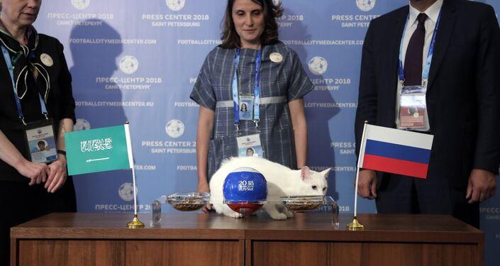 Il gatto dell'Hermitage Achille, oracolo di questi Mondiali