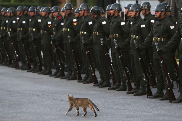 Un gatto cammina davanti a una guardia d'onore in attesa dell'arrivo del presidente turco Recep Tayyip Erdogan, 10 luglio 2018.  - Sputnik Italia