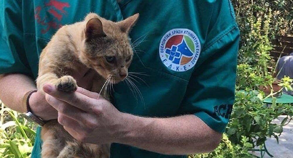 Η Εθελοντική Δράση Κτηνιάτρων φροντίζει αφιλοκερδώς ζώα στις πυρόπληκτες περιοχές