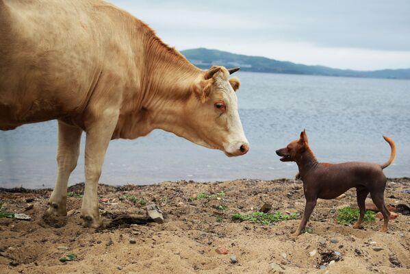 Animal nel villaggio Putjatin, Russia. - Sputnik Italia