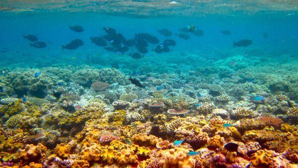 La Grande barriera corallina - Sputnik Italia