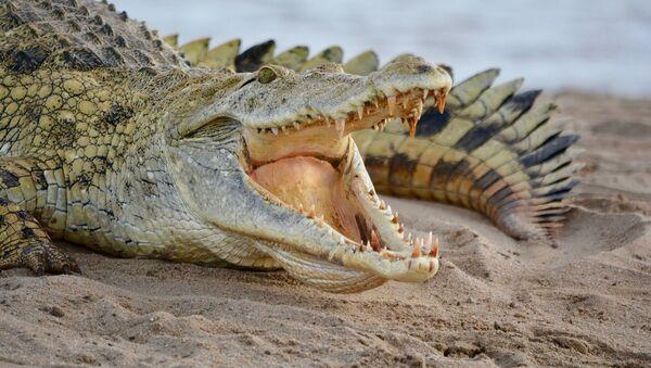 Crocodile - Sputnik Italia