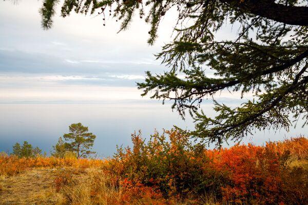 Un colore per ogni stagione - Sputnik Italia