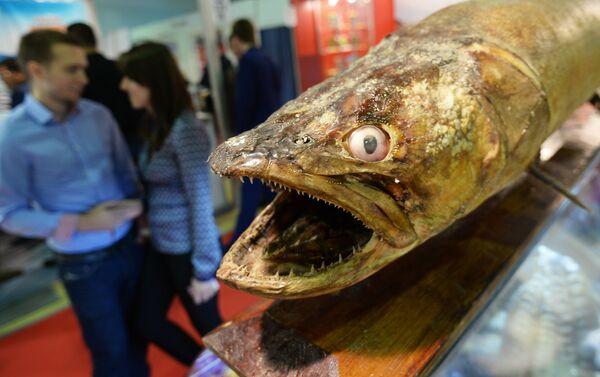 Anche i pesci rimangono a bocca aperta tra gli stand di World Food - Sputnik Italia