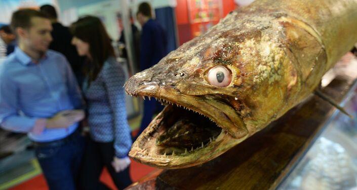 Anche i pesci rimangono a bocca aperta tra gli stand di World Food