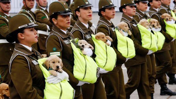 Parata militare in Cile: cani ufficiali con le scarpe a causa del maltempo - Sputnik Italia