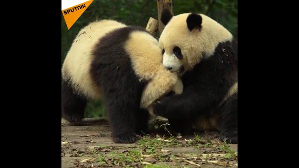 Panda - Sputnik Italia
