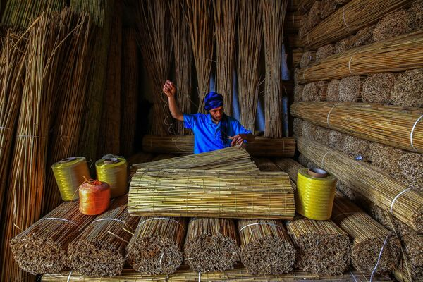 Foto 'Bulrush (giunco)' del fotografo turco Ümmü Kandilcioğlu, vincitore della nomination 'Sustainability in Practice' al Environmental Photographer of the Year 2018 - Sputnik Italia