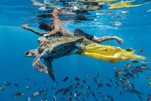 Foto 'Save turtle' del fotografo dello Sri Lanka Jing Li, vincitore della nomination Highly Commended al Environmental Photographer of the Year 2018 - Sputnik Italia