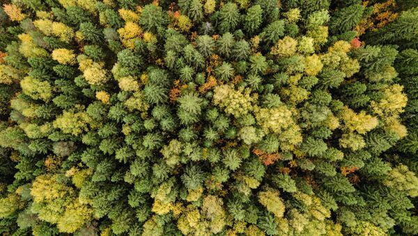Un bosco d'autunno, il Territorio di Perm'. - Sputnik Italia