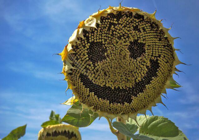 Un girasole sorridente