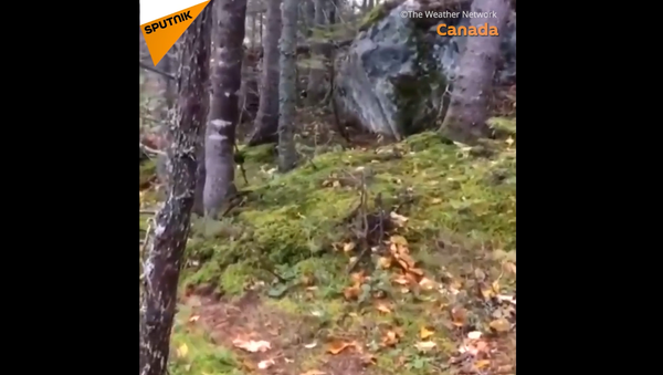 Una foresta che respira - Sputnik Italia