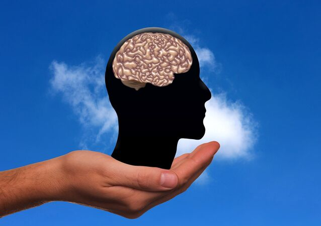 Il cervello umano