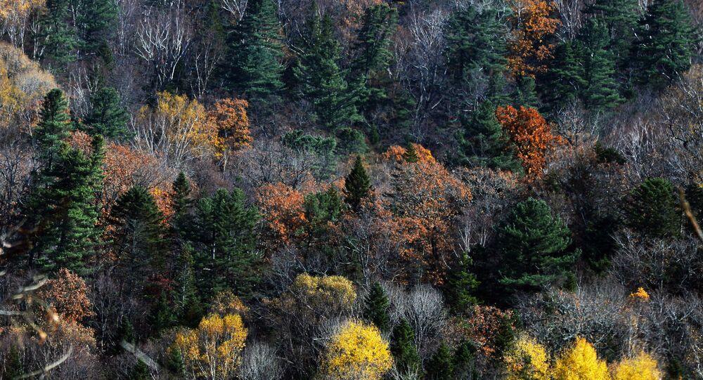 L'autunno in Russia