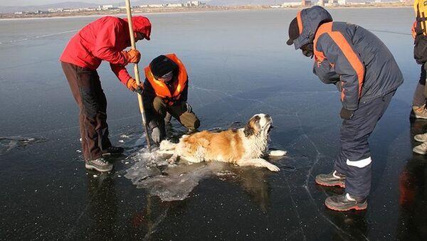 Cane salvato da Russia, salvato cane in un lago ghiacciato - Sputnik Italia