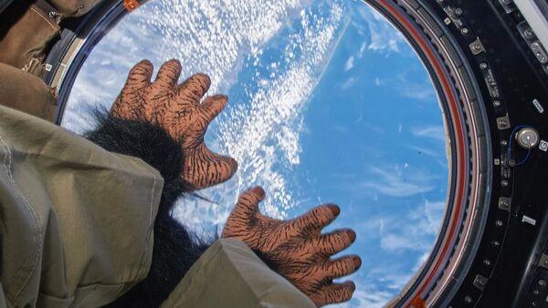 Игрушечная обезьяна на борту МКС - Sputnik Italia