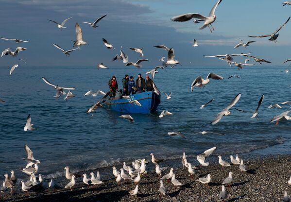 Una pescata nel Mar Nero, Sochi. - Sputnik Italia