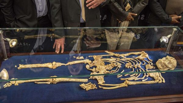 Scoperta nuova sottospecie di australopiteco - Sputnik Italia