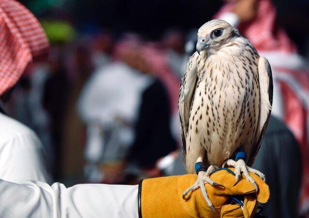 Falco da caccia