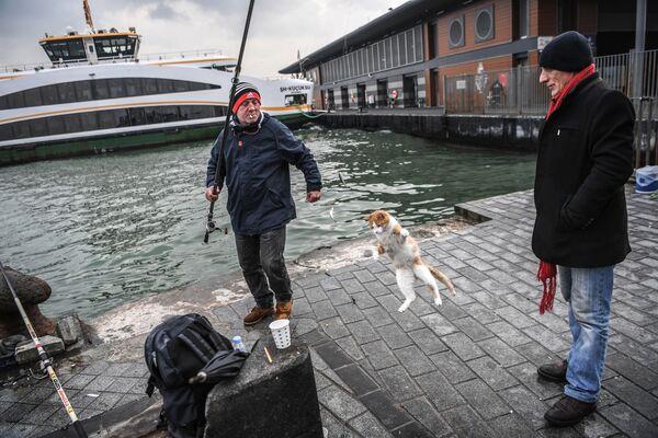 Un gatto caccia il pesciolino catturato nel Bosforo, Istanbul. - Sputnik Italia
